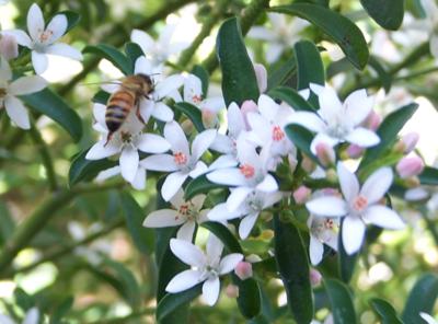 Humming bees 2