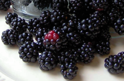 Blackberry Harvest ~ One Day In May 4